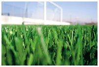 rumput futsal thumbnail07